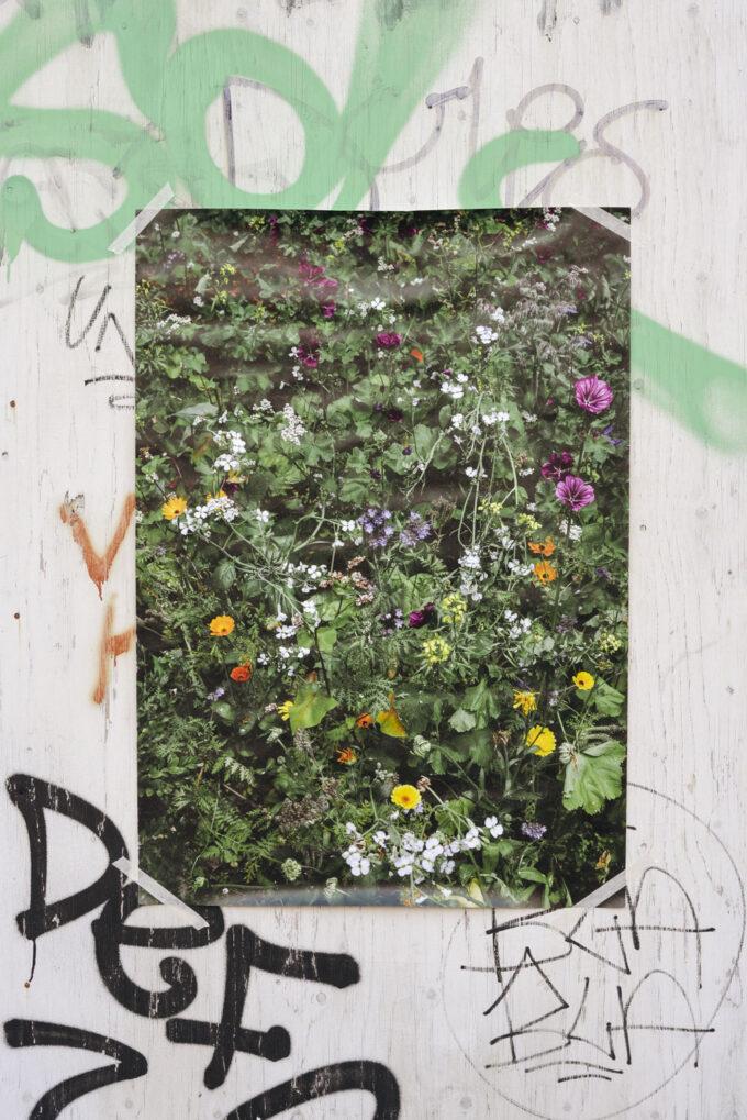 Flower field poster - Wilder Objects