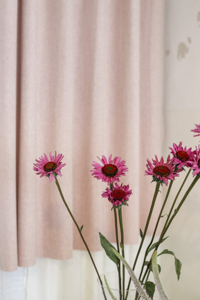 Pink echinacea at Wilder Antwerp